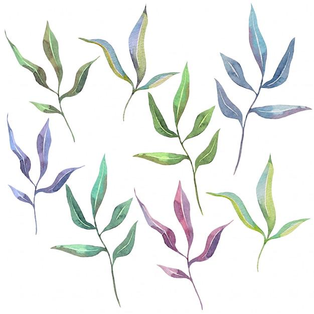 Insieme dell'acquerello disegnato a mano di foglie naturali Vettore Premium