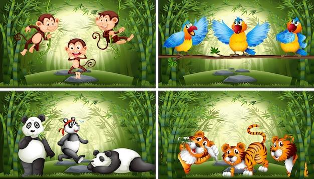Insieme dell'animale nell'illustrazione della foresta di bambù Vettore gratuito