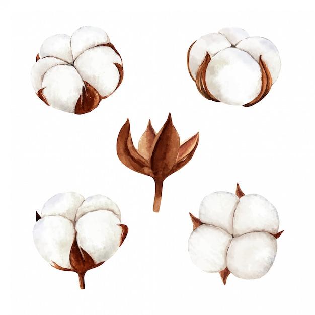 Insieme della collezione di fiori di cotone dell'acquerello disegnato a mano. pittura ad acquerello isolato su sfondo bianco, perfetto per il progetto fai-da-te Vettore Premium