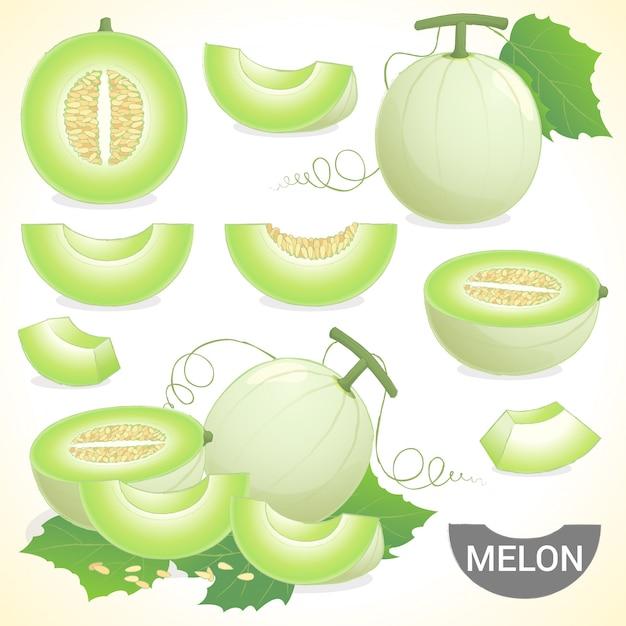 Insieme della frutta del melone del melone del cantalupo in vari stili di formato di vettore Vettore Premium