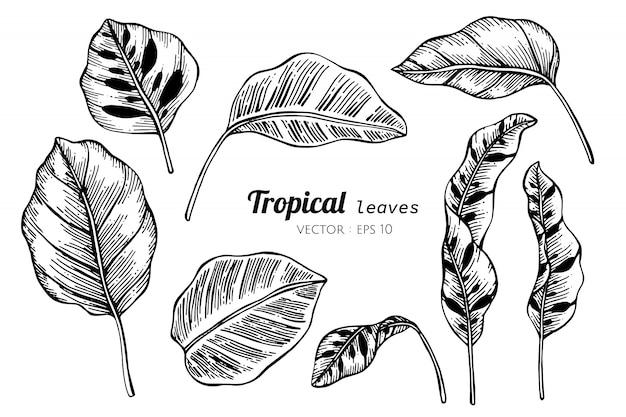 Insieme della raccolta delle foglie tropicali che disegnano illustrazione. Vettore Premium