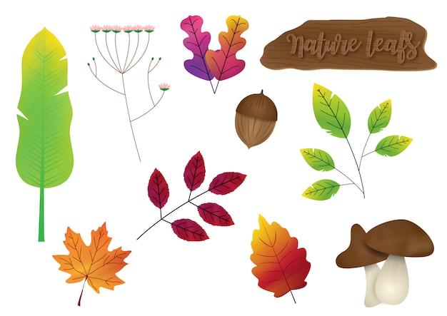 Insieme delle foglie della natura di varietà con l'isolato di legno del segno Vettore Premium