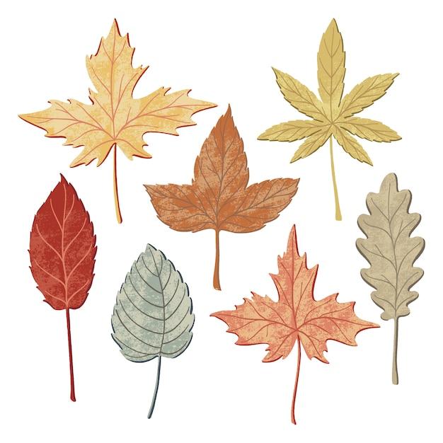 Insieme delle foglie di autunno Vettore Premium