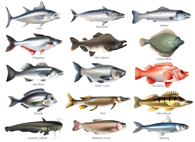 Insieme delle icone con i pesci di mare e di fiume con le iscrizioni su bianco isolato Vettore gratuito