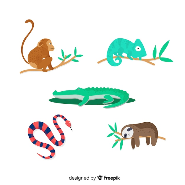 Insieme di animali tropicali: scimmia, camaleonte, coccodrillo, alligatore, serpente, bradipo. design in stile piatto Vettore gratuito