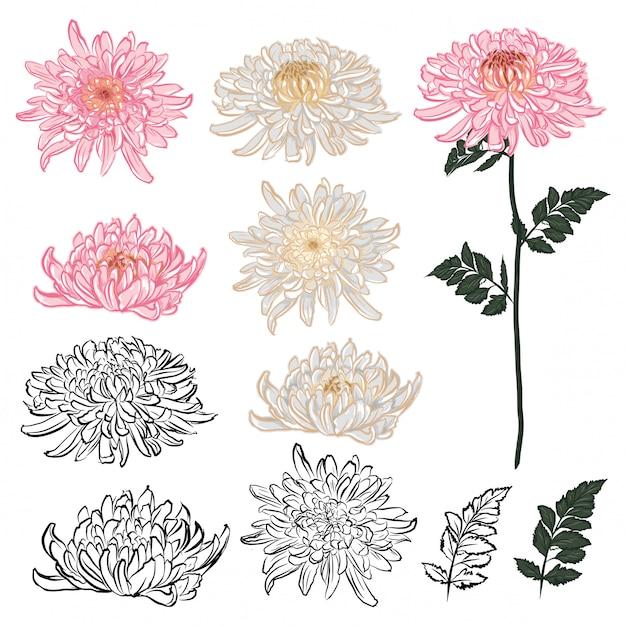 Insieme di elementi di fiori di crisantemo nel design. umore disegnato a mano di stile giapponese Vettore Premium
