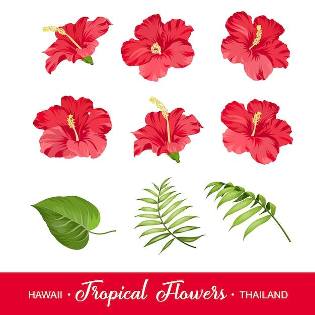 Insieme di elementi di fiori tropicali Vettore Premium