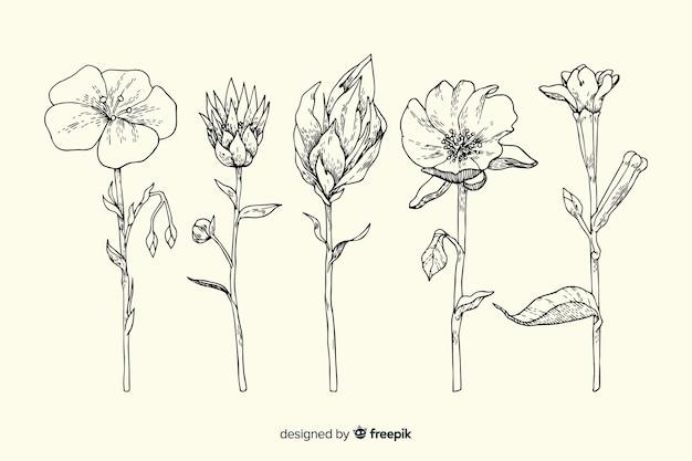 Insieme di fiori di botanica vintage disegnato a mano realistico Vettore gratuito