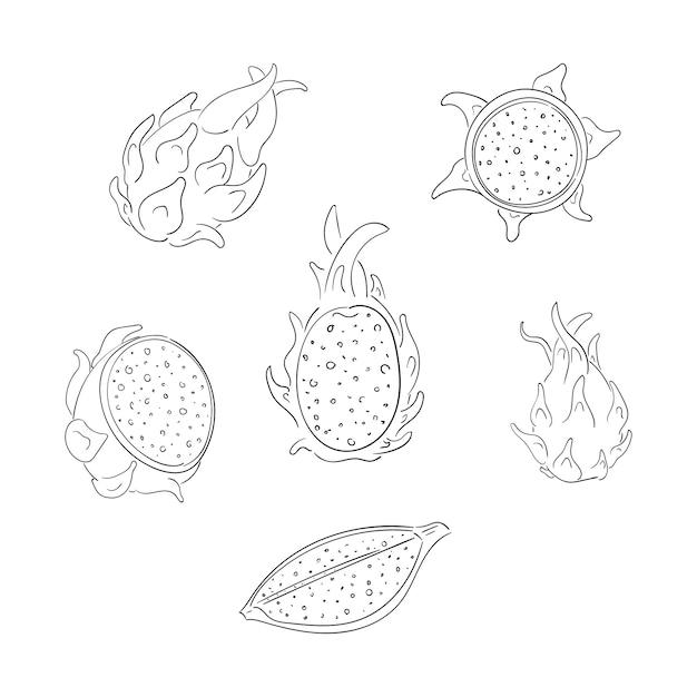 Insieme di illustrazioni di contorno di frutti interi e affettati Vettore Premium