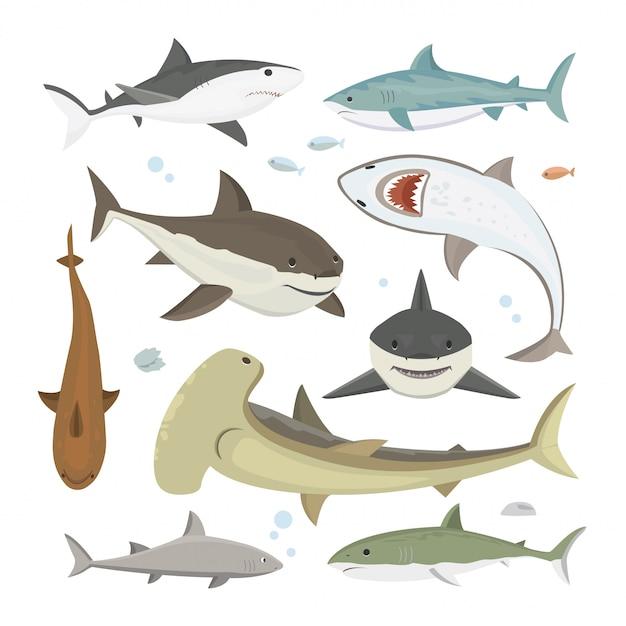 Insieme di posa differente dello squalo di vettore. Vettore Premium