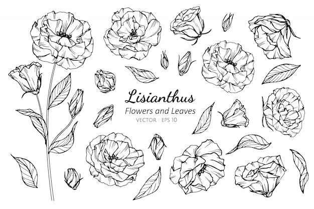 Insieme di raccolta del fiore di lisianthus Vettore Premium
