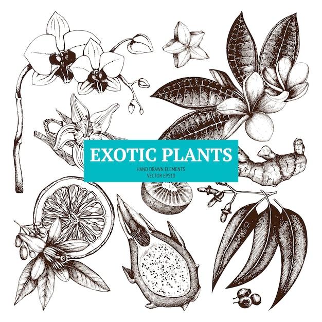Insieme di schizzo di piante tropicali abbozzato a mano fiori esotici, frutti, illustrazioni di piante Vettore Premium