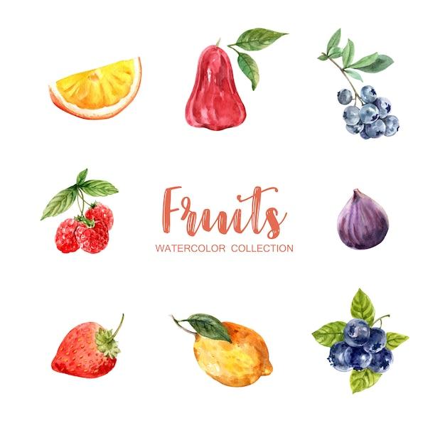 Insieme di vari frutti dell'acquerello isolato Vettore gratuito