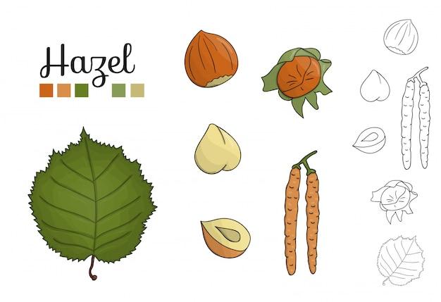 Insieme di vettore degli elementi dell'albero nocciola isolati. illustrazione botanica di foglia nocciola, brunch, fiori, noci. clipart in bianco e nero. Vettore Premium