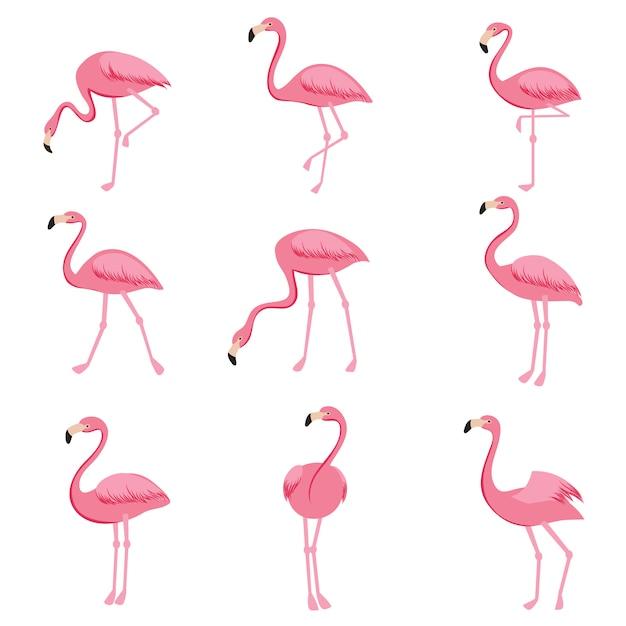 Insieme di vettore del fenicottero rosa del fumetto. collezione di fenicotteri carino Vettore Premium