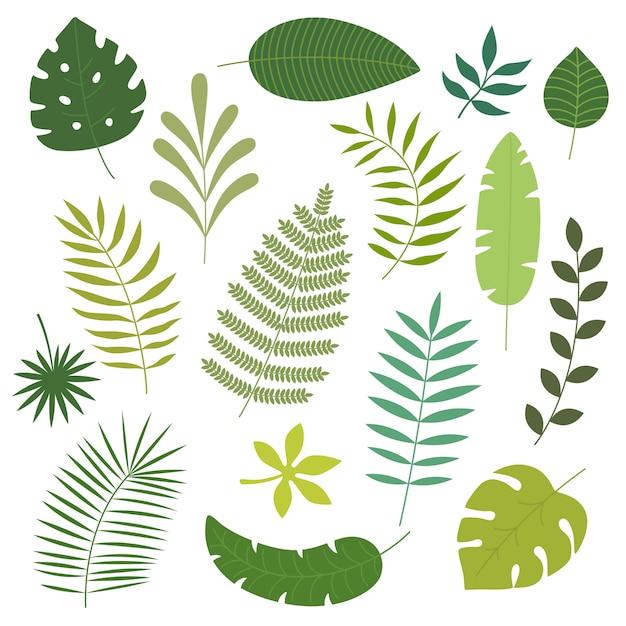 Insieme di vettore delle foglie tropicali. Vettore Premium