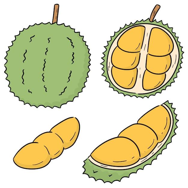 Insieme di vettore di durian Vettore Premium
