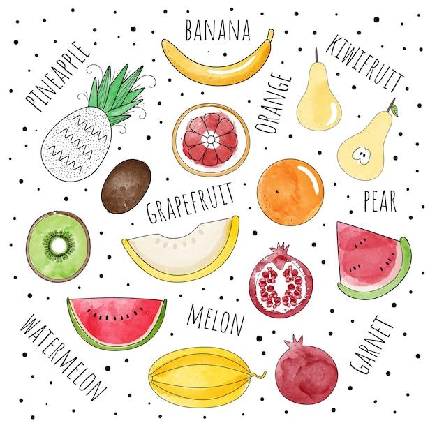 Insieme di vettore di frutta nello stile dell'acquerello. Vettore Premium