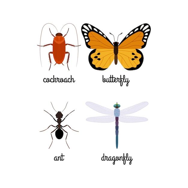 Insieme di vettore di insetti colorati Vettore Premium