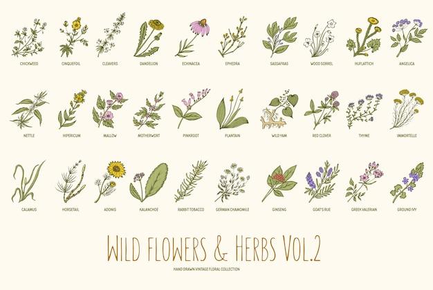 Insieme disegnato a mano delle erbe e dei fiori selvaggi Vettore Premium