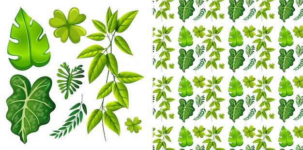 Insieme isolato delle foglie Vettore gratuito
