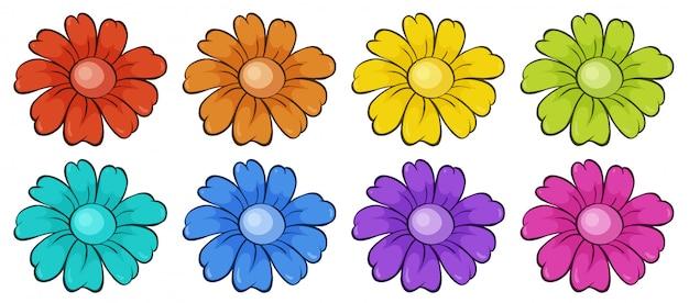 Insieme isolato di fiori Vettore gratuito