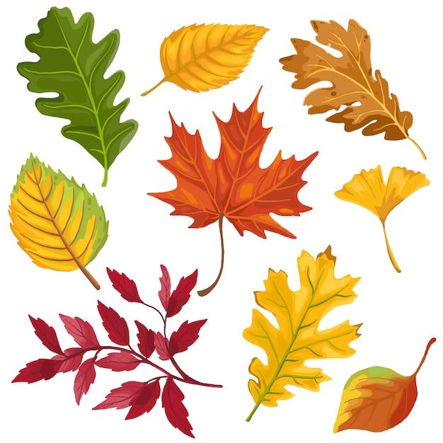 Isolato delle foglie di colore di autunno su fondo bianco Vettore Premium