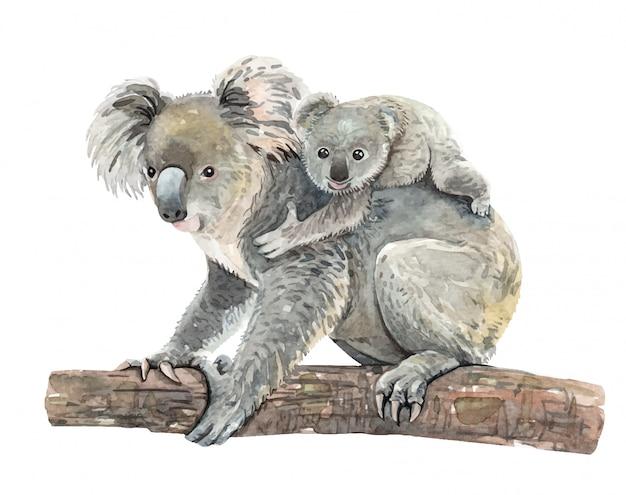 Koala acquerello e bambino sul ramo Vettore Premium