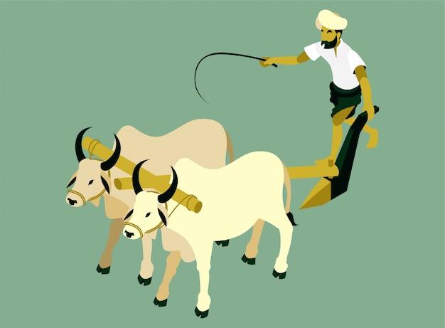 L'agricoltore indiano sta arando un campo con un'illustrazione isometrica di due mucche Vettore Premium