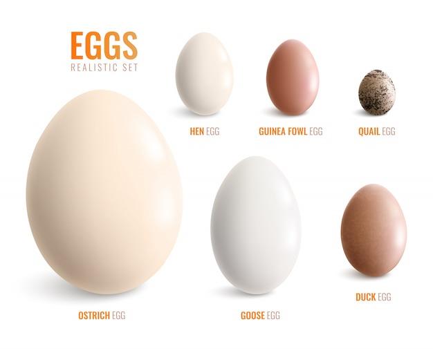 L'icona realistica colorata delle uova ha messo con le uova dell'illustrazione di vettore della quaglia della faraona dell'anatra dell'oca di gallina dello struzzo Vettore gratuito