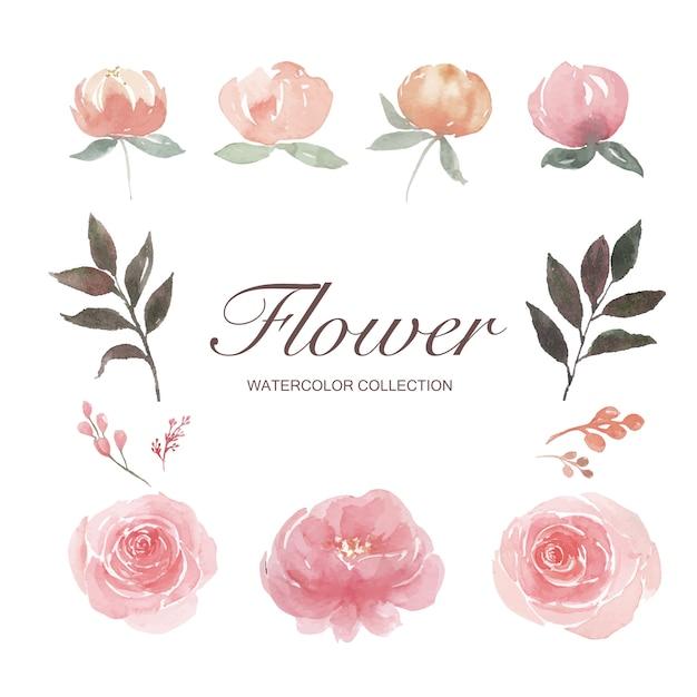 L'insieme della peonia dell'acquerello, è aumentato, germoglio di fiore, illustrazione degli elementi ha isolato il bianco. Vettore gratuito