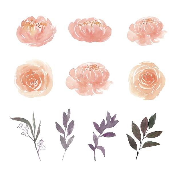 L'insieme della peonia dell'acquerello, rosa e fogliame, illustrazione degli elementi ha isolato il bianco. Vettore gratuito