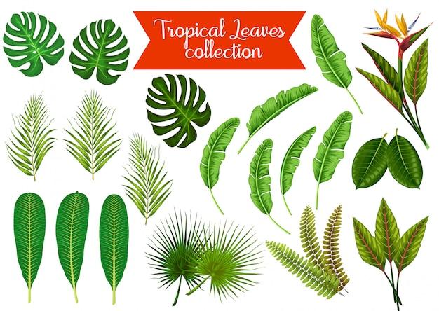 L'insieme di riserva di vettore delle foglie tropicali obietta l'illustrazione Vettore Premium