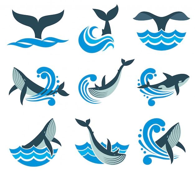 La balena selvaggia nelle onde del mare e l'acqua spruzza le icone di vettore Vettore Premium