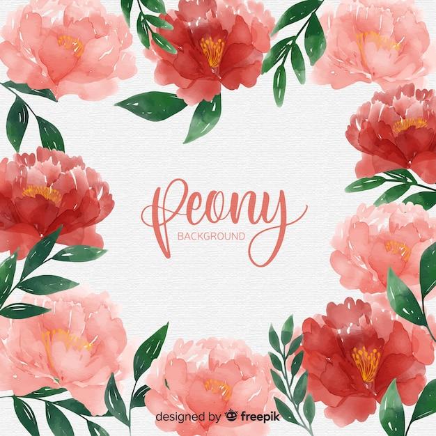 La bella peonia fiorisce la priorità bassa Vettore gratuito