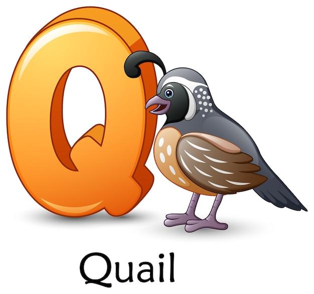 La lettera q è per l'alfabeto del fumetto di uccello di quaglia Vettore Premium