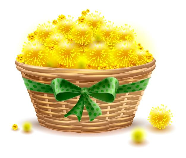 La mimosa gialla fiorisce il canestro di vimini pieno Vettore Premium