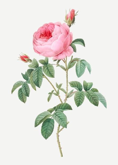 La provenza è fiorita Vettore gratuito