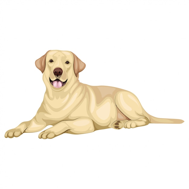 Labrador retriever illustrazione del cane Vettore Premium