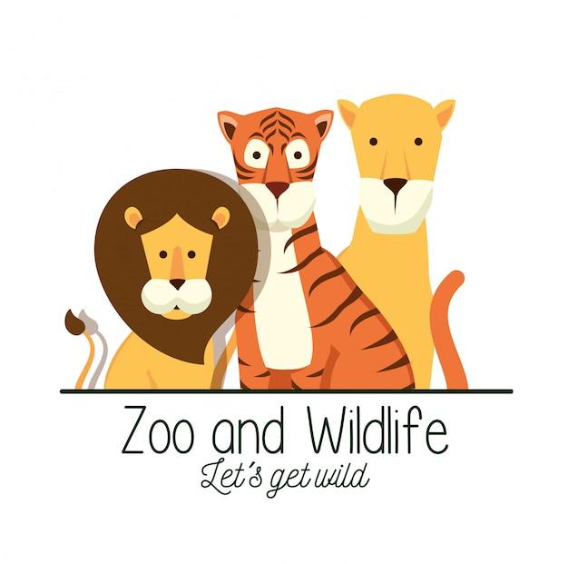 Leone con tigre e leone nella riserva safari Vettore gratuito