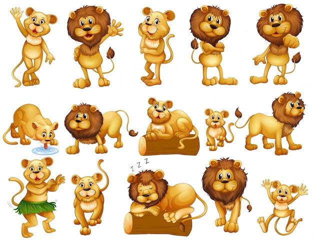 Leone e leonessa in illustrazione di azioni diverse Vettore gratuito