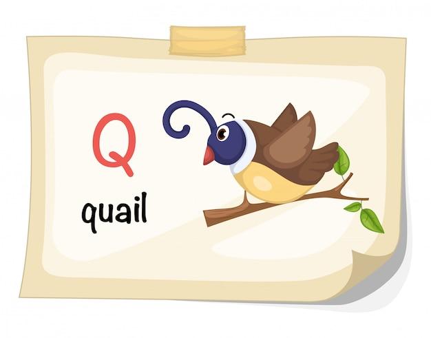 Lettera q dell'alfabeto animale per il vettore dell'illustrazione delle quaglie Vettore Premium