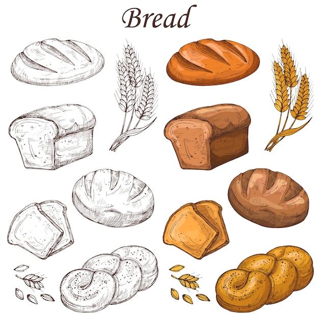 Linea e elementi colorati da forno. pagnotta di pane isolata su bianco Vettore Premium