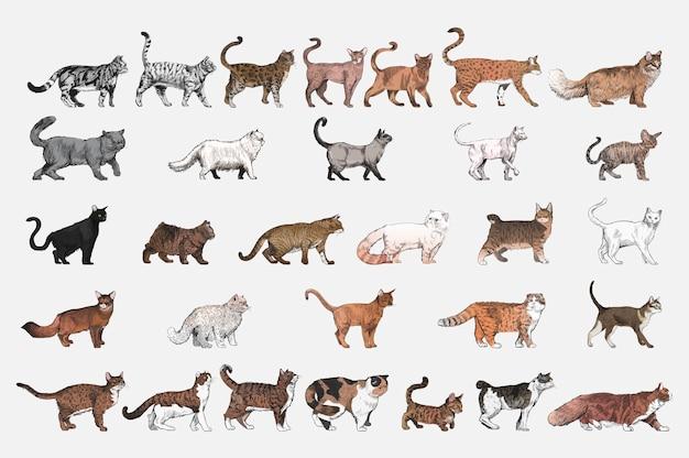 Lo stile di disegno dell'illustrazione di gatto alleva la raccolta Vettore gratuito