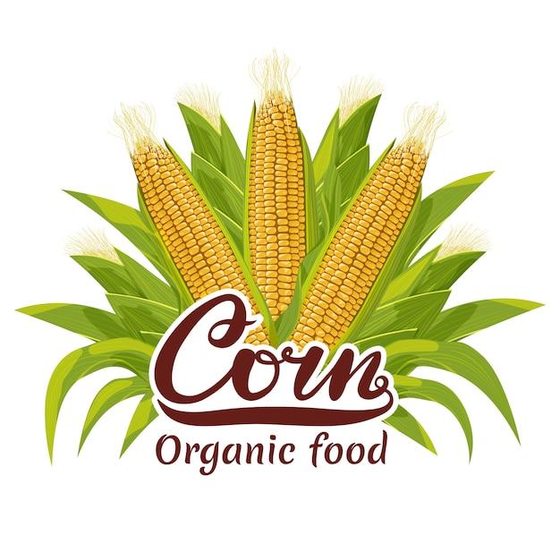 Logo di alimenti biologici pannocchia di mais Vettore Premium