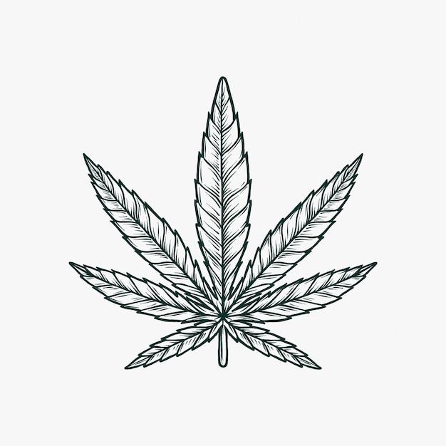 Mano che disegna l'illustrazione monocromatica d'annata di vettore della marijuana Vettore Premium