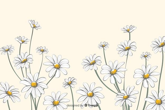 Margherite sfondo decorativo stile acquerello Vettore gratuito