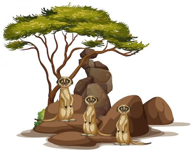 Maschera isolata dei meerkats sulla roccia Vettore gratuito