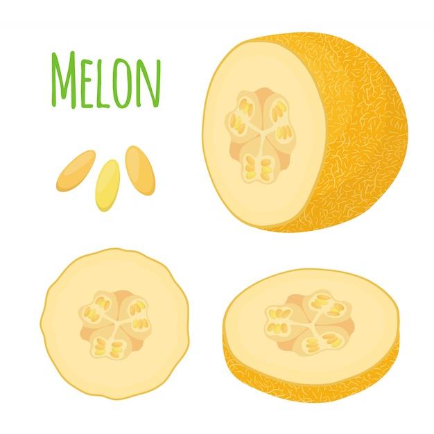 Melone giallo maturo, frutta fresca Vettore Premium