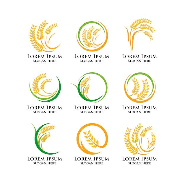 Modello di logo di grano agricoltura Vettore Premium